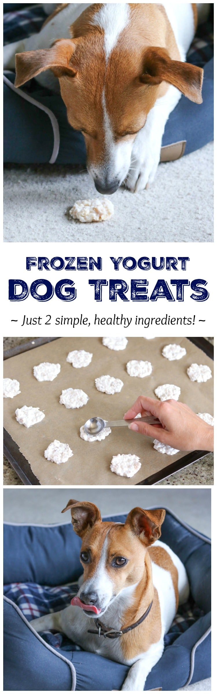 This super-easy Frozen Yogurt Homemade Dog Treat Recipe has just 2 simple ingredients dogs love – a total snap to make! Bonus: it's the perfect way to use up leftover chicken! | www.TwoHealthyKitchens.com