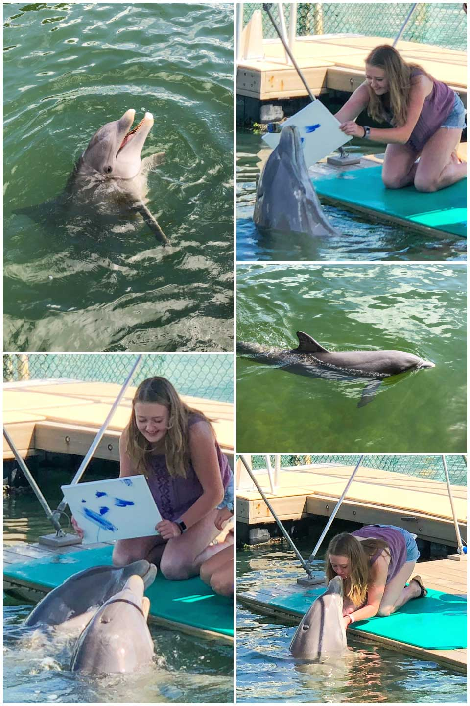 Collage of 5 photos of the dolphins that Amy painted with while we were in Key Largo, Florida.