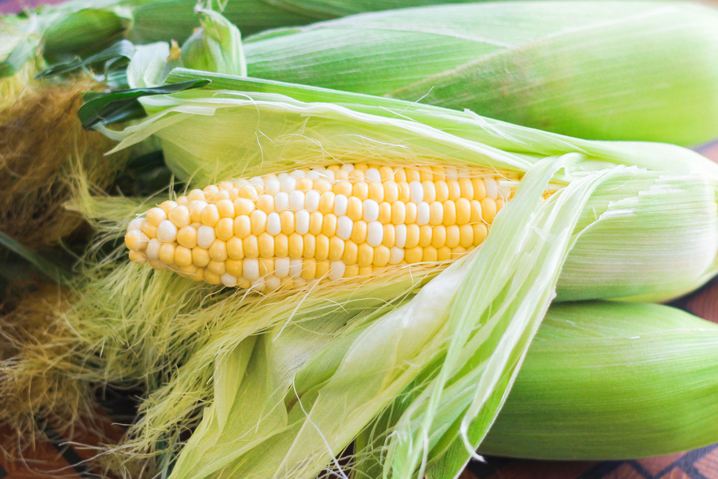 Closeup of a partially husked ear of corn on top of a pile of other corn still in the husks.